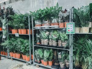 Boutique éphémère Plantes pour tous
